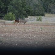Texas Whitetail Ranch